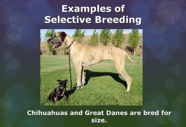 More selective breeding, er I mean: online dating /img/selective-breeding.jpg